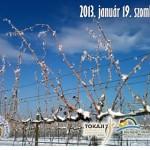 Tokaj Vince-napi szőlő és borszentelés 2013 január 19