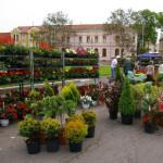 VI. Böszörményi dísznövény és Ízek Fesztiválja 2015