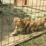I. Állatkertek Éjszakája 2012