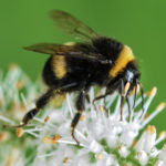 A méhek napja – április 30.